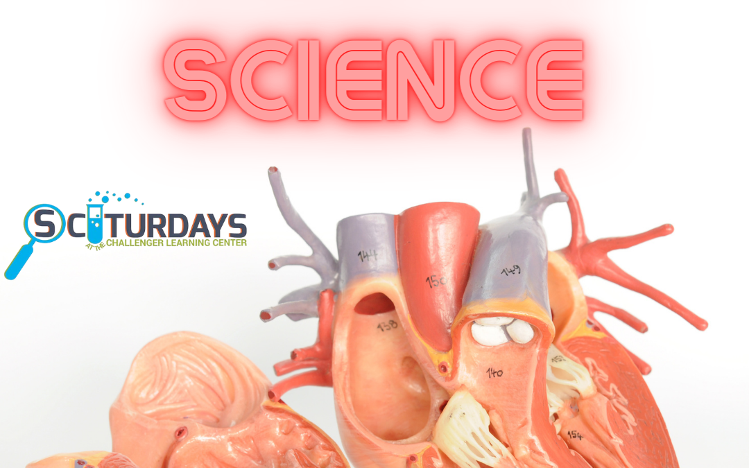 SCIturdays: Cardiac Science