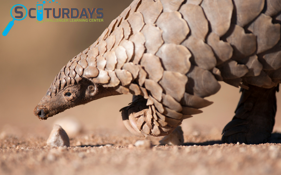 SCIturdays: Creature Conservation